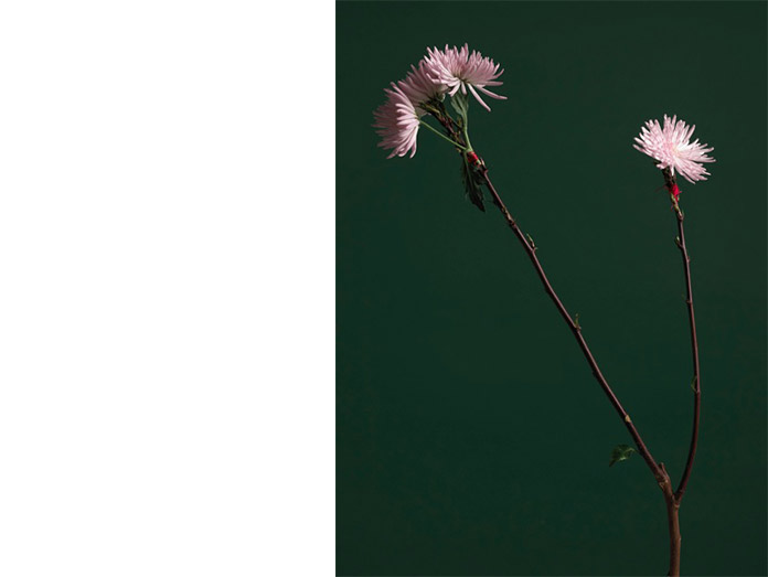flower metamorphosis : photography robin brigham/brigit hegarty